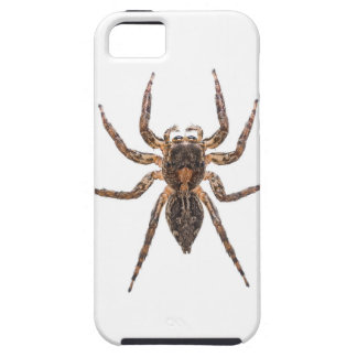 Female Pantropical Jumping Spider iPhone 5 Case