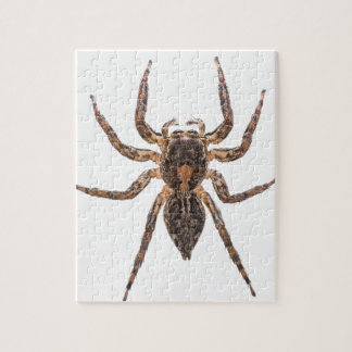 Female Pantropical Jumping Spider Jigsaw Puzzle