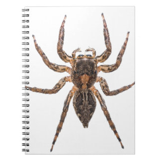 Female Pantropical Jumping Spider Notebooks