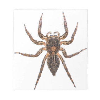 Female Pantropical Jumping Spider Notepad