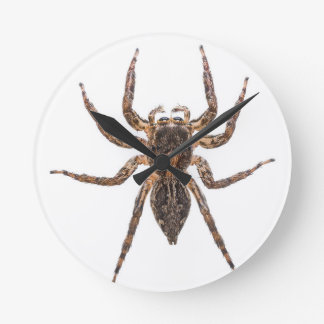Female Pantropical Jumping Spider Round Clock