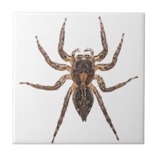 Female Pantropical Jumping Spider Tile