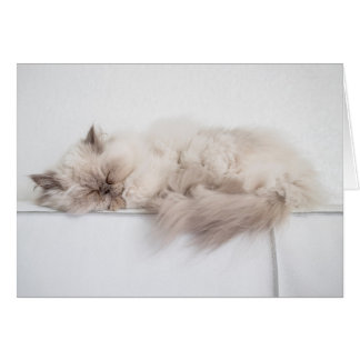 Female Persian Cat Card
