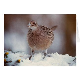 Female Pheasant - card