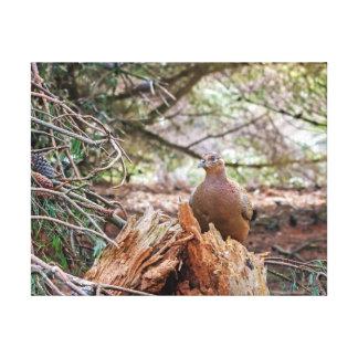 Female pheasant in the rain photography canvas print