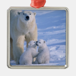 Female Polar Bear Standing with 2 Cubs at her Christmas Ornament