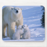 Female Polar Bear Standing with 2 Cubs at her Mouse Pad