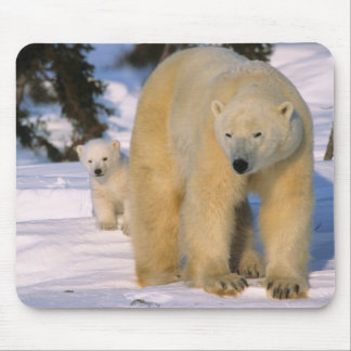 Female Polar Bear Standing with one cub or coy Mouse Mat