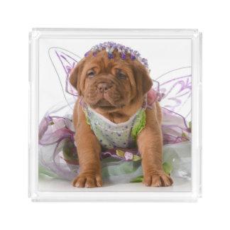 Female Puppy - Dogue De Bordeaux Puppy