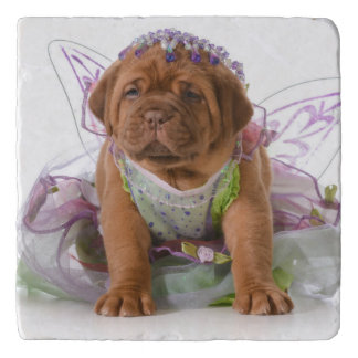 Female Puppy - Dogue De Bordeaux Puppy Trivet