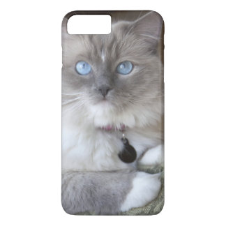 Female Ragdoll Cat iPhone 8 Plus/7 Plus Case