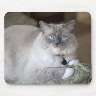Female Ragdoll Cat Mouse Mat