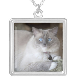 Female Ragdoll Cat Silver Plated Necklace