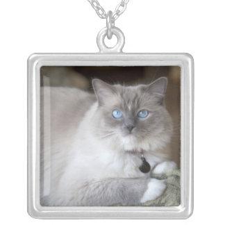 Female Ragdoll Cat Square Pendant Necklace