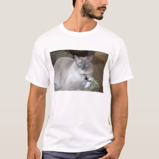 Female Ragdoll Cat T-Shirt