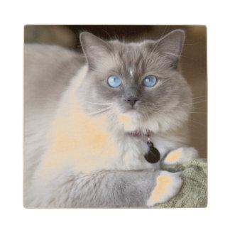 Female Ragdoll Cat Wood Coaster