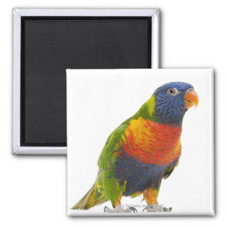 Female Rainbow Lorikeet - Trichoglossus Square Magnet