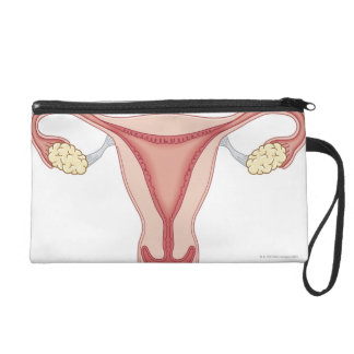 Female Reproductive System 2 Wristlet Clutches