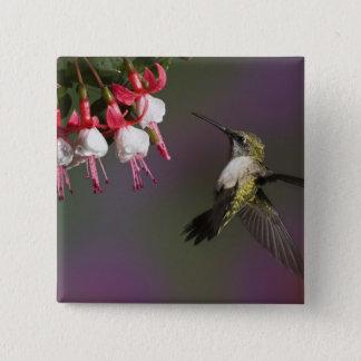 Female Ruby throated Hummingbird in flight. 15 Cm Square Badge