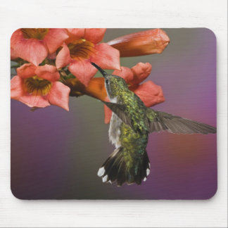 Female Ruby Throated Hummingbird in flight, Mouse Mat
