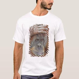 Female Sumatran Orangutan, Pongo pygmaeus T-Shirt