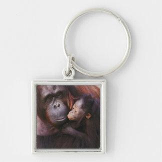 Female Sumatran Orangutan with baby, Pongo Key Ring