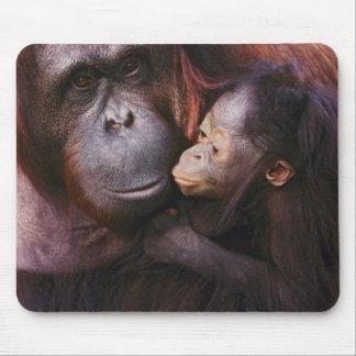 Female Sumatran Orangutan with baby, Pongo Mouse Pad