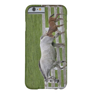 Female thoroughbred and young foal barely there iPhone 6 case