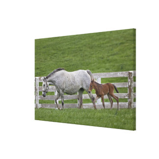 Female thoroughbred and young foal canvas print