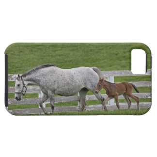 Female thoroughbred and young foal iPhone 5 covers