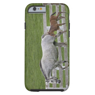 Female thoroughbred and young foal tough iPhone 6 case