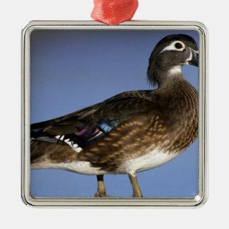 Female wood duck, Canada Silver-Colored Square Decoration