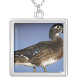 Female wood duck, Canada Silver Plated Necklace