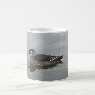 Female Wood Duck Coffee Mug