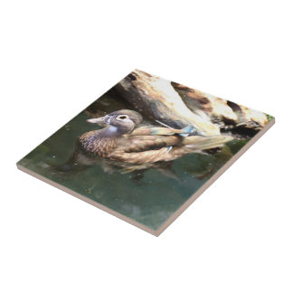 Female Wood Duck Tile