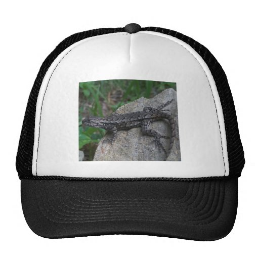 Fence Lizard Hat