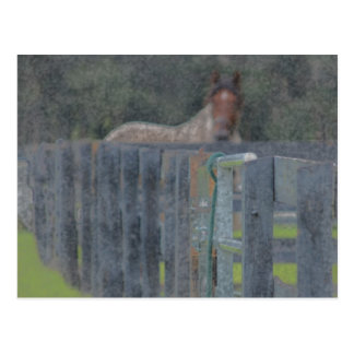 fence with horse behind abstracted grunged post card