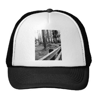 Fenced Woods Cap