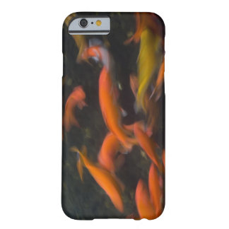 Feng Shui believe koi fish bring good luck. Barely There iPhone 6 Case