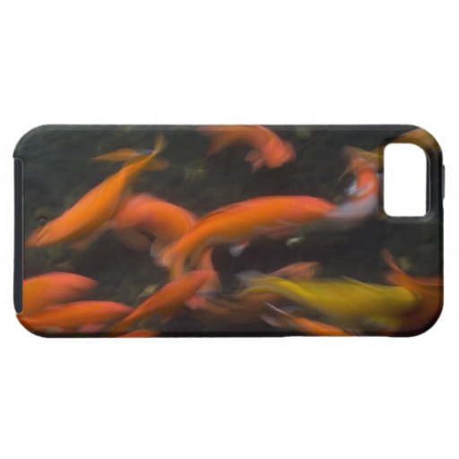 Feng Shui believe koi fish bring good luck. iPhone 5 Cases