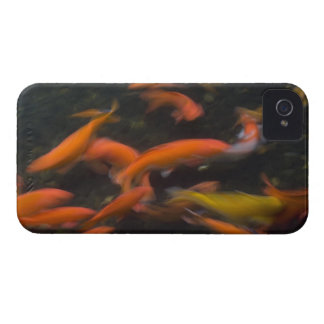 Feng Shui believe koi fish bring good luck. iPhone 4 Case-Mate Case