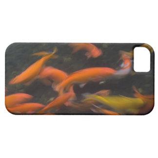 Feng Shui believe koi fish bring good luck. iPhone 5 Case