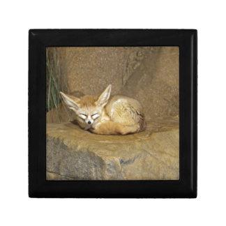 fennec fox gift box
