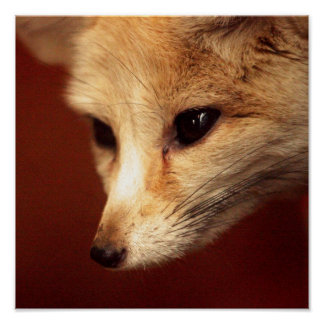 Fennec Fox Posters