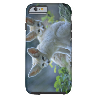 Fennek (Vulpes zerda) W�_stenfuchs, Fennec Tough iPhone 6 Case