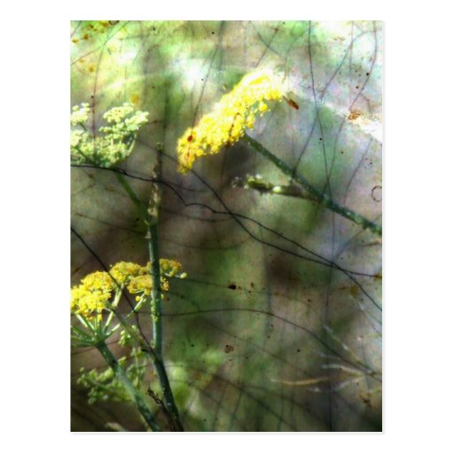 Fennel Post Card