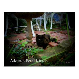 Feral Cat Adoption Postcard Postcard