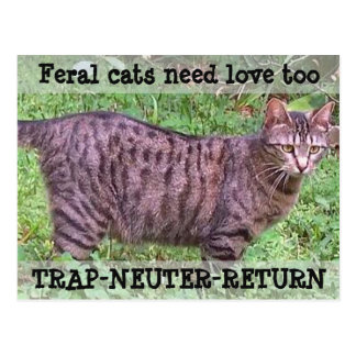 Feral Cats Need Love Too - Tabby Cat Postcard