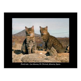 Feral cats postcard - Los Alamos Nr Chirivel Spain