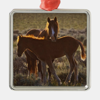 Feral Horse Equus caballus) adult and colt in Christmas Ornament